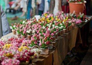 Рассады цветов