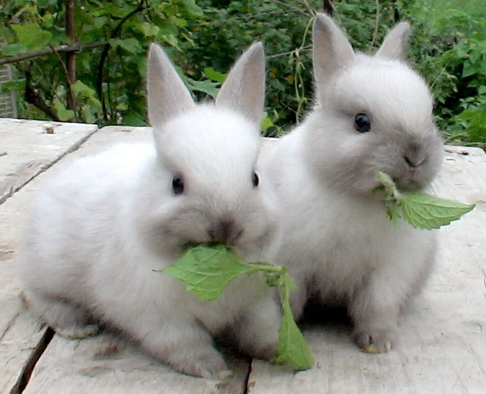 Корм для кролей