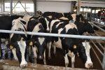Помещение для коров